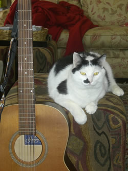 Charley T. Cat