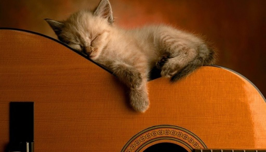 cat sleeping on acoustic guitar